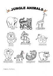 english teaching worksheets jungle animals