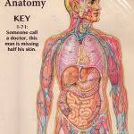 Human Anatomy And Physiology Study Guide Pdf Human Anatomy And Physiology Study Guide Pdf Tags Images