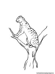 jaguar climbing tree printable kids coloring pages free