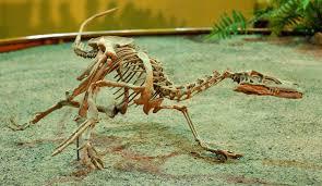 velociraptor wikipedia