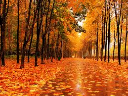 images solid fall wallpaper themes sc