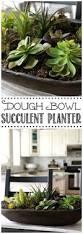 Low Bowl Planters by The 25 Best Succulent Bowls Ideas On Pinterest Suculent Plants