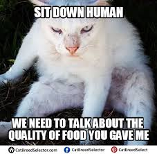 White Cat Meme - pictures of white cat memes funny cute angry grumpy cats memes