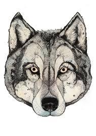 sketch of wolf best tattoo designs