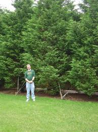 planting trees in shade trees on steep fertilizer