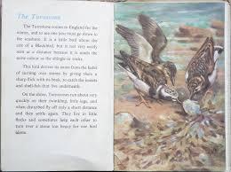 the second ladybird book of british birds 13 u2013 the turnstone
