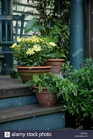 potted plants on the back porch stock photo royalty free image