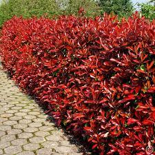 immobilien kaufen in damme haus kaufen kalaydo de 16 best garten heckenpflanzen images on garden hedges