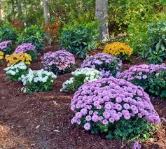 Our Favorite Plants How To by 70 Best Plants In My Garden Images On Pinterest Garden Dream