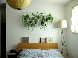 bed plants for the bedroom
