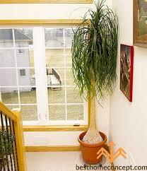 best low light indoor trees best of indoor trees low light home design home concept