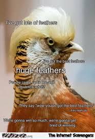 Funny Bird Memes - funny bird look like trump pmslweb