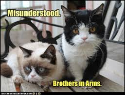 Tardar Sauce Meme - brothers in arms lolcats lol cat memes funny cats funny