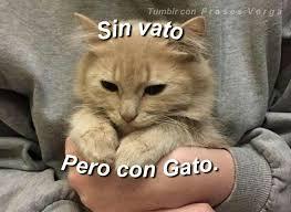 imagenes de gatitos sin frases sin pito pero con gatito síguenos tumblr con frases