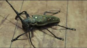 hair cutter insect youtube