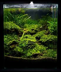 Aquascape Aquarium Designs 13 Best Aquascape U0026 Hardscape Aquarium Images On Pinterest