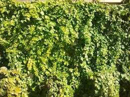 kansas native plants powell gardens u0027 blog