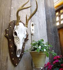 deer skull mounted on european wood home decor u0026 lighting city