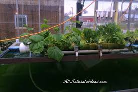 from seed to plant gardening indoors all natural ideas