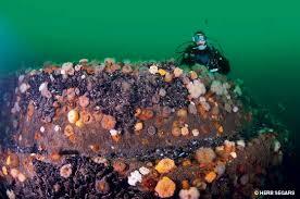 alert diver new jersey the underwater garden state