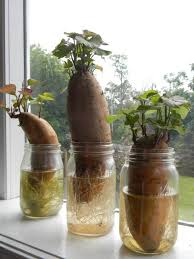 10 Vegetables U0026 Herbs You by 15 Vegetables And Herbs You Can Buy Once And Regrow Forever