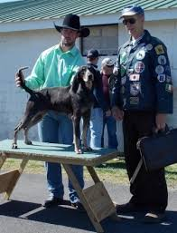bluetick coonhound in florida dog winners around the world thedogpress
