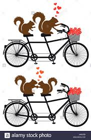 squirrel couple in love on tandem bicycle with red hearts vector