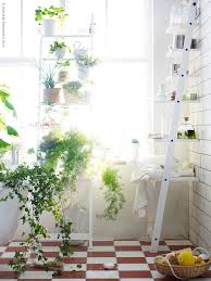 Chic Room Nuance Lovely Bathroom Plants To Give Natural Nuance With Preety Flower