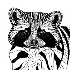 racoon or coon head vector animal illustration for t shirt sketch