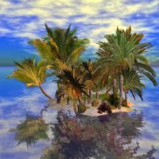 second acs cold hardy palm trees 2crocks and plants jpg