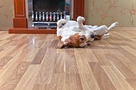 3 residential flooring options for homes with pets carolina