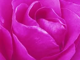 Paint Colorful - free images nature texture flower petal tulip decoration
