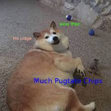 Wow Dog Meme - doge memes daily wow such amaze