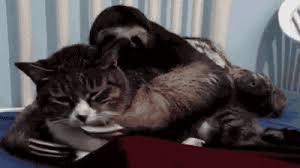 Sexy Sloth Meme - sexy rapey sloth cat animated gif popkey