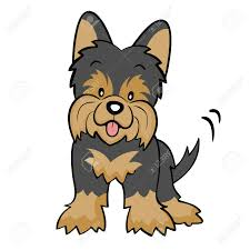 yorkshire terrier dog clipart explore pictures