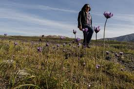 native plant source native flowers aren u0027t the only plants in u0027super bloom u0027 this spring