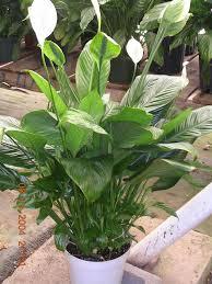 Plant Delivery 26 Best Pretty Plants Images On Pinterest Tropical Plants Plant