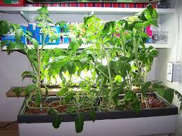 indoor hydroponic herb garden gardening ideas