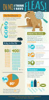 Ticks In Backyard Infographic Facts About Fleas U0026 Ticks On Your Pet Dogs