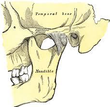 Human Jaw Bone Anatomy Temporomandibular Joint Wikipedia