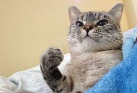 Kitty Meme Generator - unhappy cat meme generator image memes at relatably com