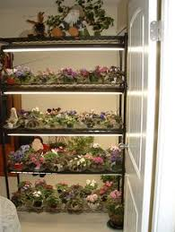 african violet grow light african violet plant light stand shelf this is a typical