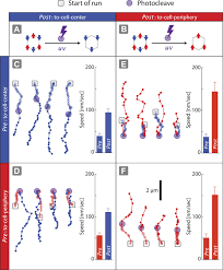 tuning myosin driven sorting on cellular actin networks elife