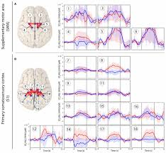 frontiers cortical sensorimotor processing of painful pressure
