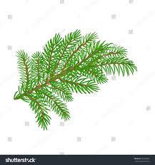 spruce christmas tree symbol celebration white stock vector