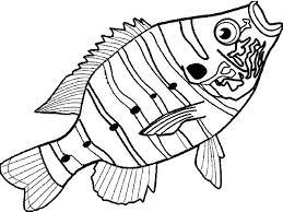 delicious bass fish colouring delicious bass fish colouring