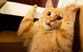 Scared Cat Meme - create meme scared cat scared cat funny cat scared cat