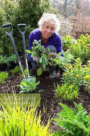 Carol Klein Life In A Cottage Garden - gap gardens carol klein dividing a rudbeckia whilst planting out