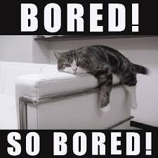 Bored Meme - bored cat meme on imgfave