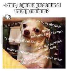 Memes De Chihuahua - wow perro chihuahua meme facebook